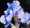 Regency, Black Iris