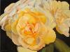 Evening Serenade, roses
