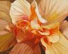 Wildfire, hibiscus